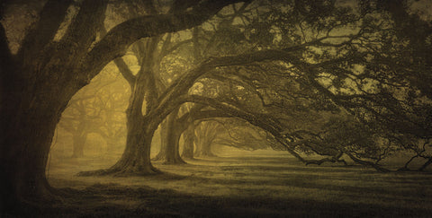 William Guion - Oak Alley Morning Shadows