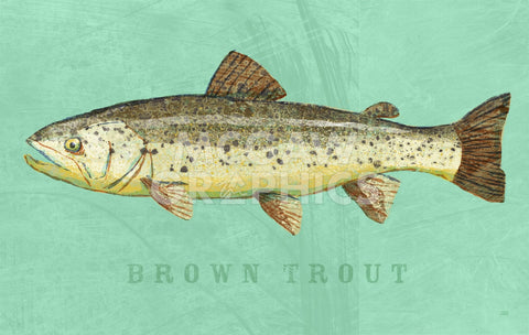 Brown Trout -  John W. Golden - McGaw Graphics