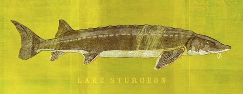 John W. Golden - Lake Sturgeon