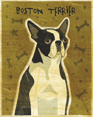 Boston Terrier -  John W. Golden - McGaw Graphics