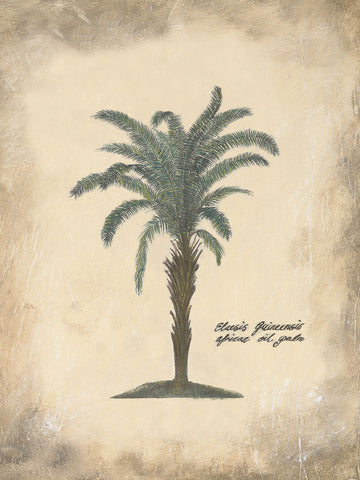 Annabel Hewitt - African Oil Palm