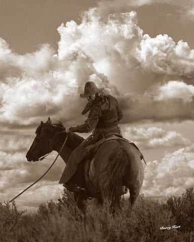 Colorado Cowboy -  Barry Hart - McGaw Graphics