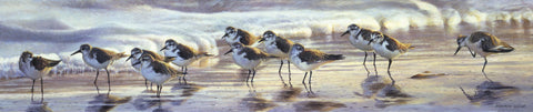 Shoreline Sanderlings -  Matthew Hillier - McGaw Graphics