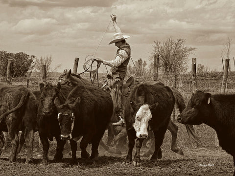 Mancos Roping -  Barry Hart - McGaw Graphics