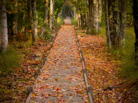 Autumn Path -  Michael Hudson - McGaw Graphics