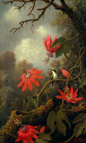 Hummingbird and Passionflowers, ca. 1875–85 -  Martin Johnson Heade - McGaw Graphics