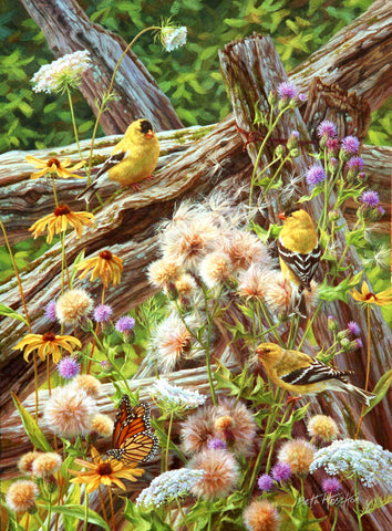 Summer Breeze - American Goldfinches - McGaw Graphics