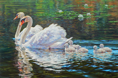 Royal Family - Mute Swans - McGaw Graphics
