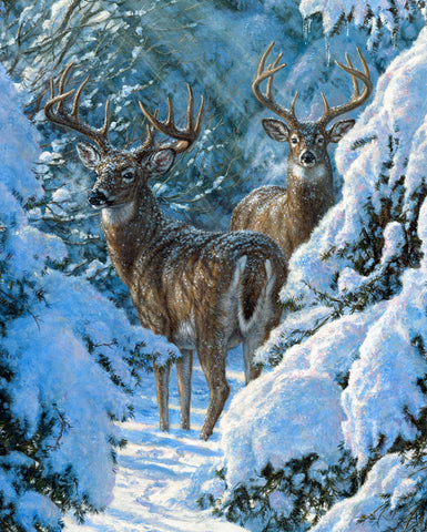 Winter Sentinels - White-Tailed Deer - McGaw Graphics