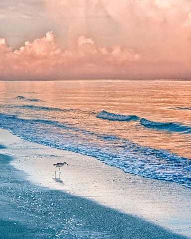 Mary Lou Johnson - Sandpiper at Sunrise