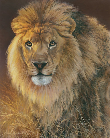 Power and Presence - African Lion -  Joni Johnson-Godsy - McGaw Graphics