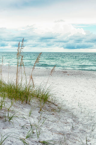 Beach Secrets -  Mary Lou Johnson - McGaw Graphics