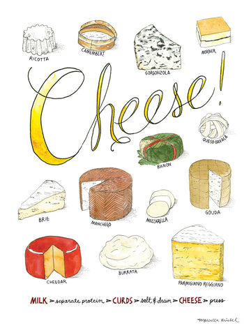 Cheese -  Marcella Kriebel - McGaw Graphics