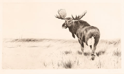 Wilhelm Kuhnert - Moose Etching, between 1915 and 1924