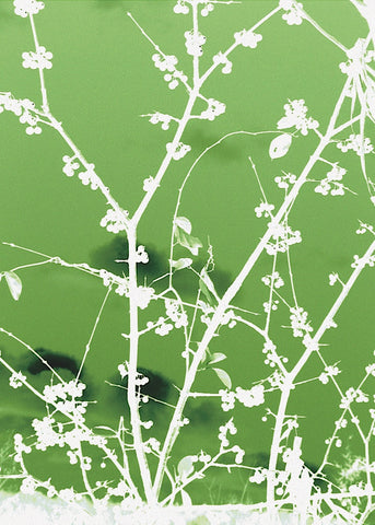 Autumn Branch (green) -  Jenny Kraft - McGaw Graphics