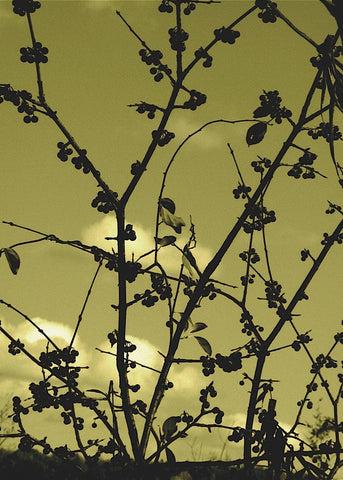 Autumn Branch (sepia) -  Jenny Kraft - McGaw Graphics