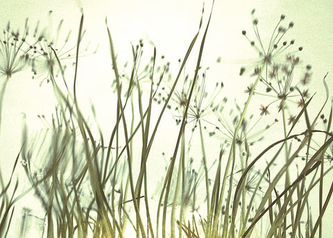 Watery Grasses 3 -  Jenny Kraft - McGaw Graphics