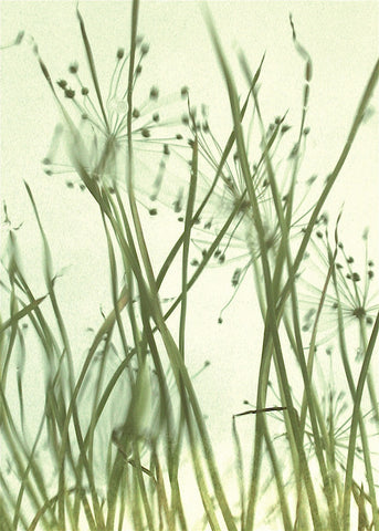 Watery Grasses 1 -  Jenny Kraft - McGaw Graphics