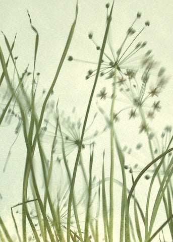 Watery Grasses 2 -  Jenny Kraft - McGaw Graphics
