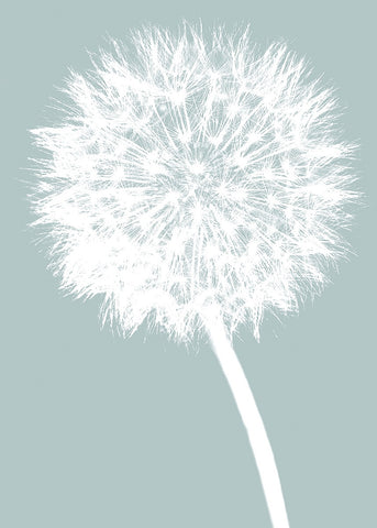 Dandelion (blue) -  Jenny Kraft - McGaw Graphics