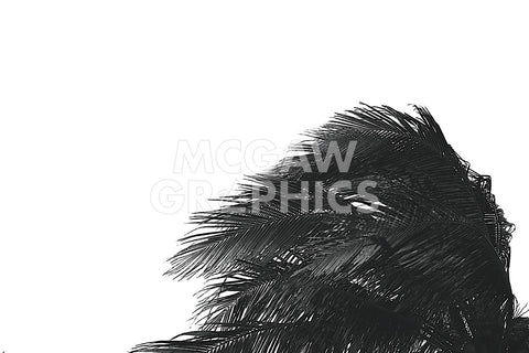 Palms 1 -  Jamie Kingham - McGaw Graphics