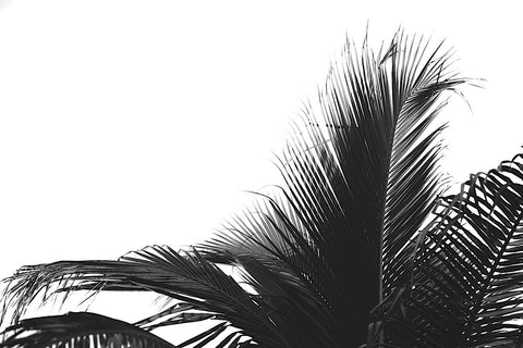 Jamie Kingham - Palms 2