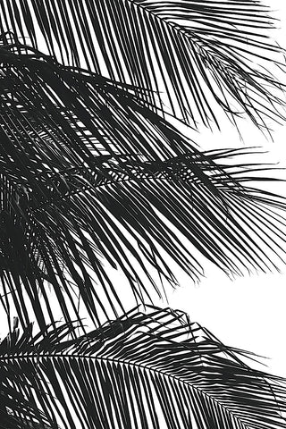 Palms 4 -  Jamie Kingham - McGaw Graphics