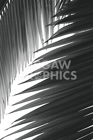 Palms 6 -  Jamie Kingham - McGaw Graphics