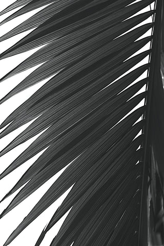 Jamie Kingham - Palms 7