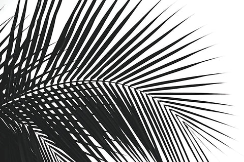 Jamie Kingham - Palms 10