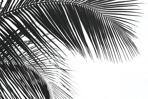 Jamie Kingham - Palms 11