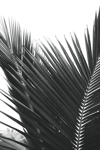 Jamie Kingham - Palms 12
