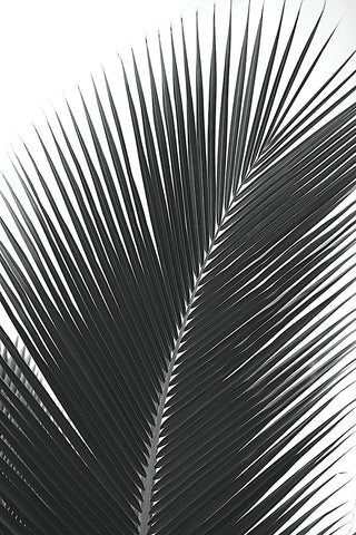 Jamie Kingham - Palms 14