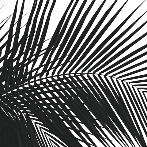 Jamie Kingham - Palms 10 (detail)
