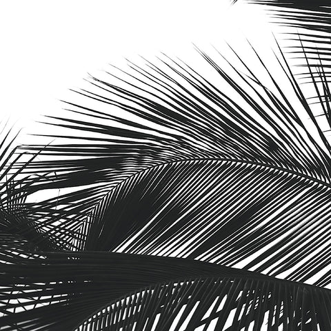 Palms 13 (detail) -  Jamie Kingham - McGaw Graphics