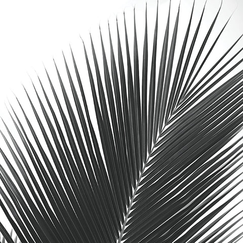 Palms 14 (detail) -  Jamie Kingham - McGaw Graphics