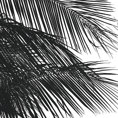 Jamie Kingham - Palms 4 (detail)