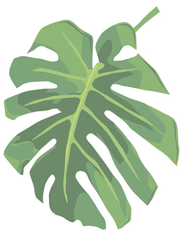 Philodendron 1 -  Jenny Kraft - McGaw Graphics