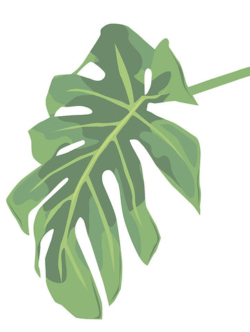Philodendron 3 -  Jenny Kraft - McGaw Graphics