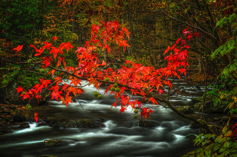 Fall in Smokies -  Robert Lott - McGaw Graphics