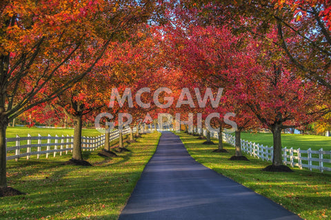 Lane in Fall -  Robert Lott - McGaw Graphics
