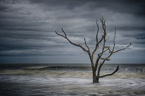 Tree on Botany Bay -  Robert Lott - McGaw Graphics