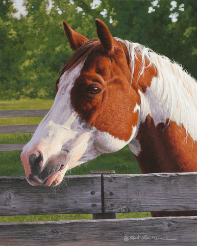 Shotzie - Horse Portrait -  Rod Lawrence - McGaw Graphics