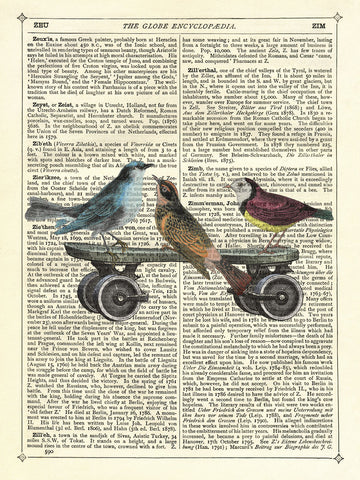 Birds on a Skateboard -  Marion McConaghie - McGaw Graphics