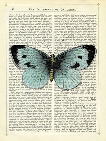 Blue Butterfly -  Marion McConaghie - McGaw Graphics