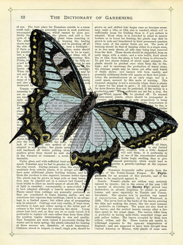 Angled Butterfly -  Marion McConaghie - McGaw Graphics
