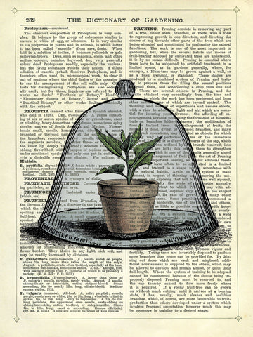 Plant Pot in Glass Cloche -  Marion McConaghie - McGaw Graphics