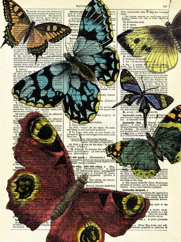 Selection of Butterflies -  Marion McConaghie - McGaw Graphics
