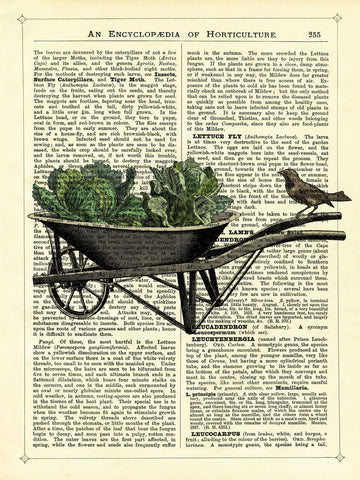 Wheelbarrow Lettuce & Bird -  Marion McConaghie - McGaw Graphics