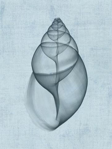 Achatina Shell (light blue) -  Bert Myers - McGaw Graphics